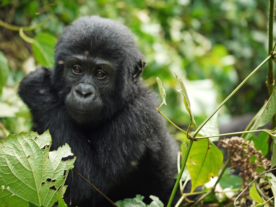 Viaggi In Uganda