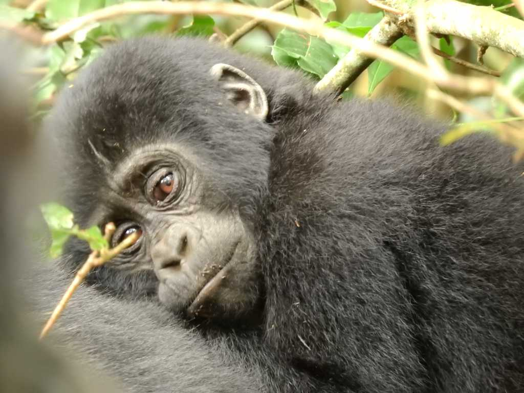 Viaggi in Uganda e i Gorilla Pamm Travel