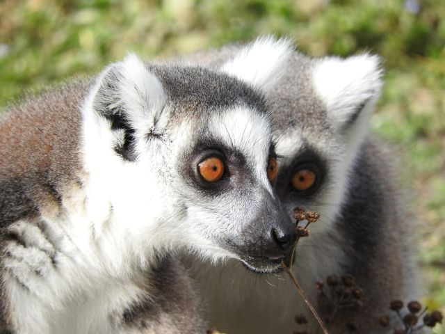 Madagascar qualche consiglio